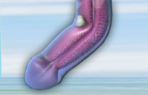 durchschnittsgrösse penis schweiz